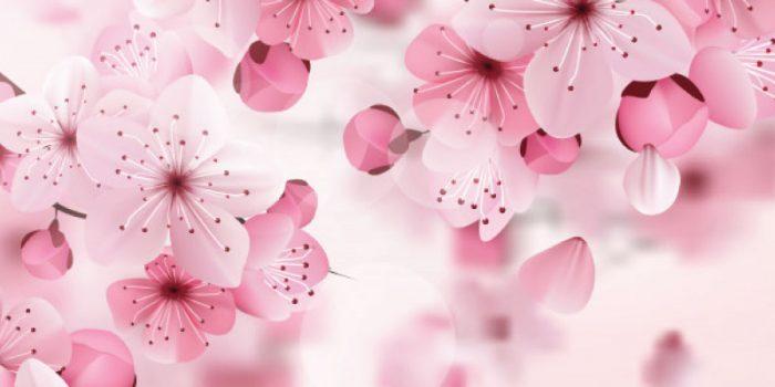 Pink Cherry Sakura background undangan