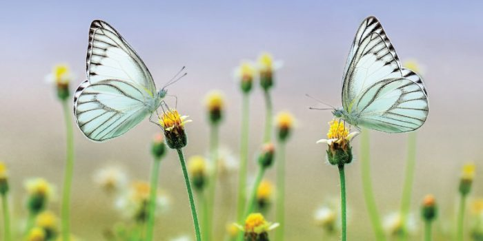 background undangan dengan bunga dan kupu-kupu